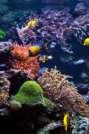 Hawaii Reef Hero - Coral Reef
